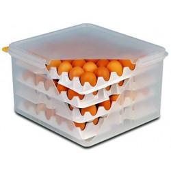 APS Eier-Box GN 2/3