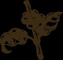 Bartscher Kaffeepflanze Image